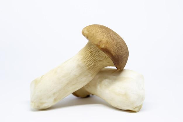 Cogumelos orgânicos eryngii.