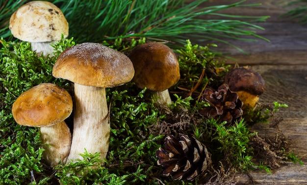 Cogumelos poloneses e brancos sobre um fundo de madeira