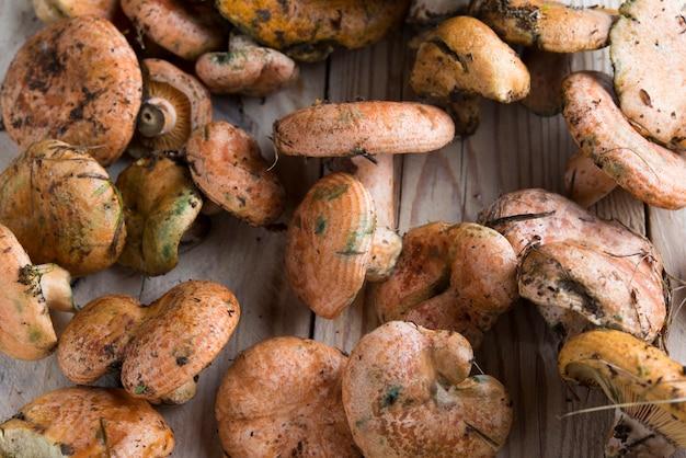 Cogumelos rovellon na madeira