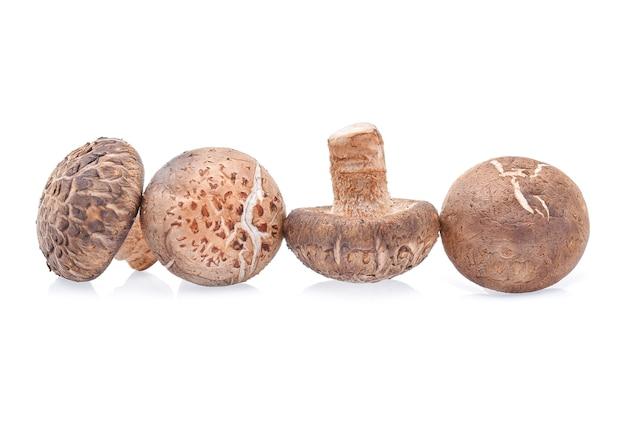 Cogumelos shiitake em fundo branco