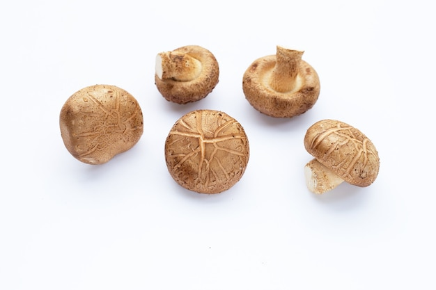 Cogumelos shiitake frescos em fundo branco.