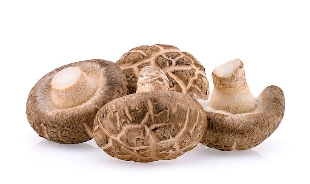 Cogumelos shiitake isolados no branco