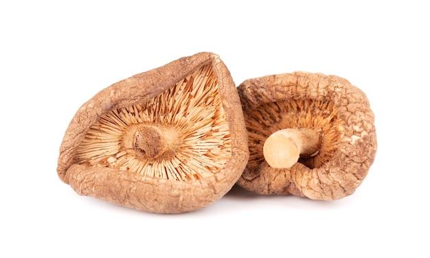 Cogumelos shiitake secos, isolados no fundo branco. cogumelo japonês da floresta. lentinula edodes. fechar-se.