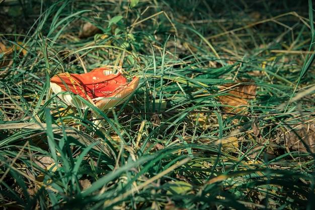 Cogumelos venenosos na floresta sob a árvore na grama