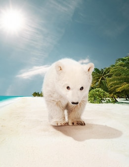 Colagem de conceito de mudança climática