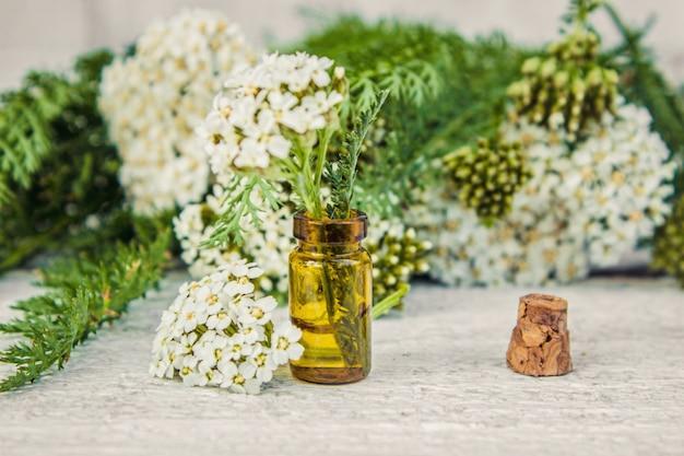 Colagem de ervas medicinais. foco seletivo. plantas de natureza bio.