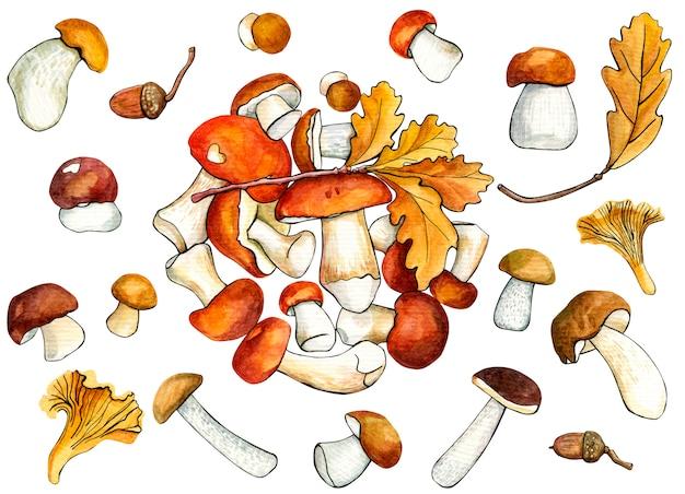 Coleção cogumelo selvagem em branco