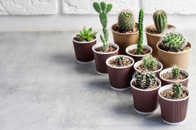 Coleção de cactos e plantas suculentas em pequenos copos de papel em fundo branco de concreto