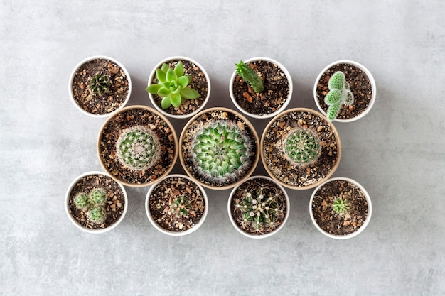 Coleção de cactos e plantas suculentas em pequenos copos de papel em uma superfície de concreto