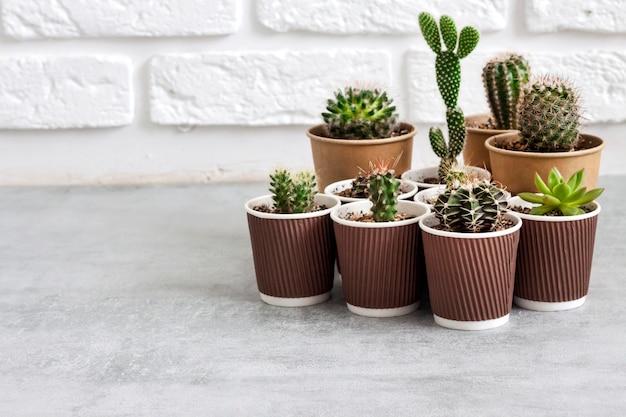 Coleção de cactos e plantas suculentas em pequenos copos de papel. horta doméstica. copie o espaço
