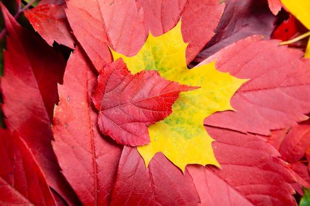 Coleção de diferentes folhas coloridas de outono