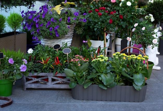 Coleção de flores coloridas, plantas domésticas e plantas ornamentais em vasos contra a parede, perto da entrada da floricultura.