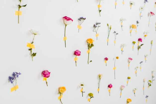Coleção de flores desabrochando primavera