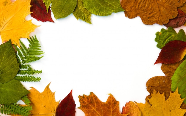Coleção de folhas de outono na moldura de fundo branco