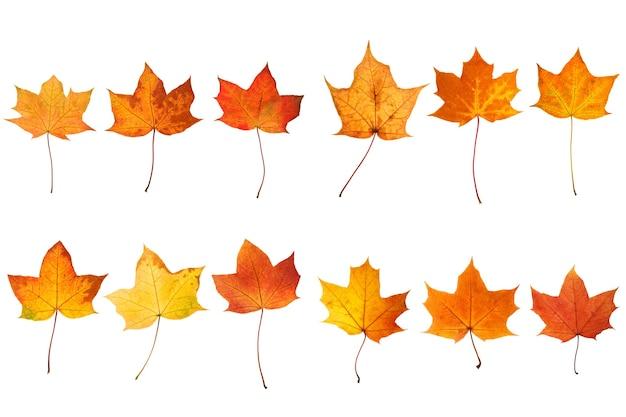Coleção de lindas folhas de outono isoladas no fundo branco