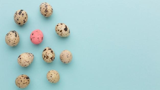 Coleção de ovos de codorna vista superior