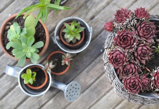 Coleção de planta suculenta em vaso na prancha de madeira