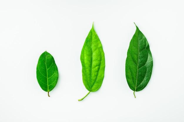Coleção de um verde deixa na mesa branca.