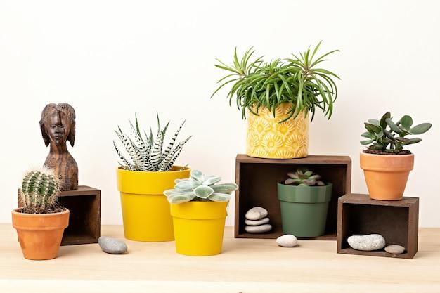 Coleção de várias plantas e suculentas em vasos coloridos. cactos em vasos e plantas da casa contra uma parede de luz. o elegante jardim interno