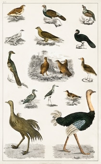 Coleção de vários pássaros de uma história da terra e natureza animada (1820) por oliver goldsmi