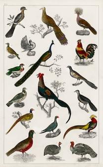 Coleção de vários pássaros de uma história da terra e natureza animada (1820)