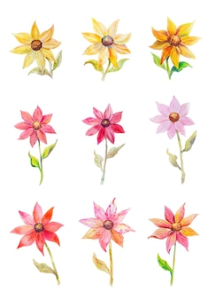 Coleção de vários tipos de flores em aquarela multicoloridas isoladas no fundo branco