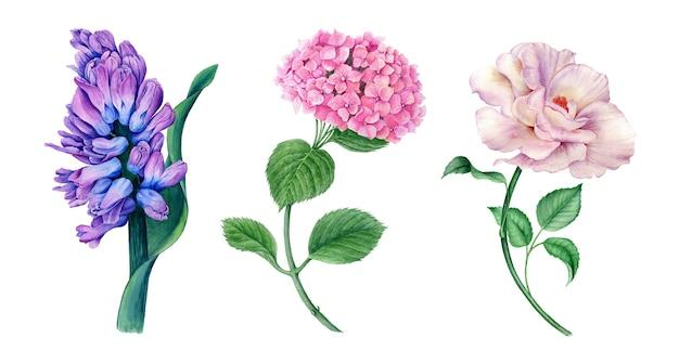 Coleção floral de ilustração botânica em aquarela vintage de jacinto, hortênsia e rosa