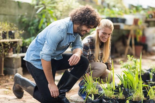 Colegas de trabalho inspecionando plantas