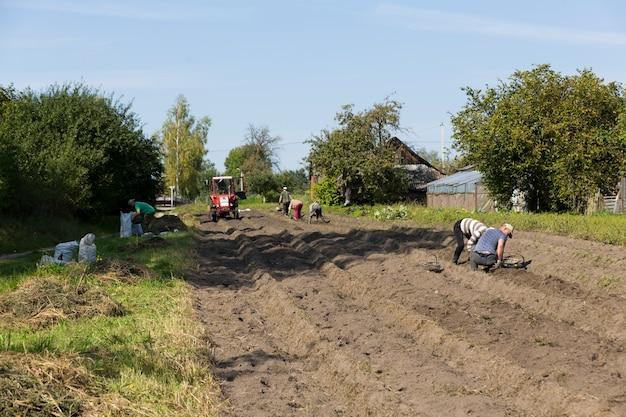 Coleta de batatas na aldeia em uma fazenda subsidiária. trabalho manual e assistência com pequeno trator. foto de alta qualidade