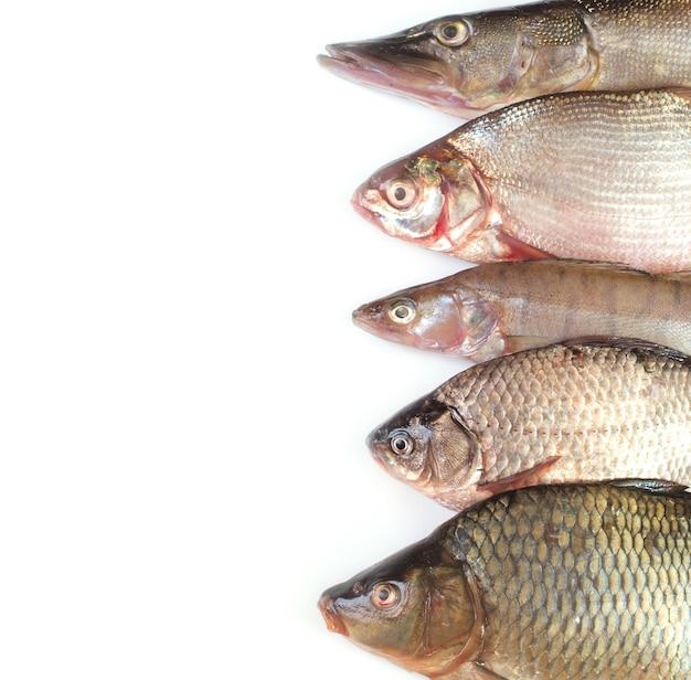 Coleta de peixes