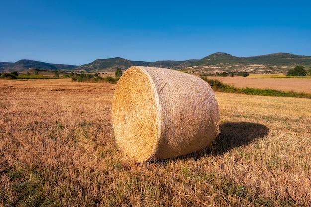Colete de feno, colhendo na paisagem de campo dourado