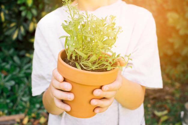 Colheita, criança, com, planta verde, em, pote
