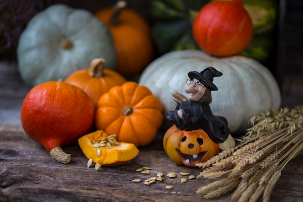 Colheita de abóbora, orelhas e bruxa