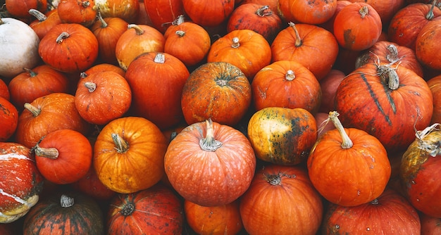 Colheita de abóboras no outono pilha de abóboras laranja no mercado agrícola