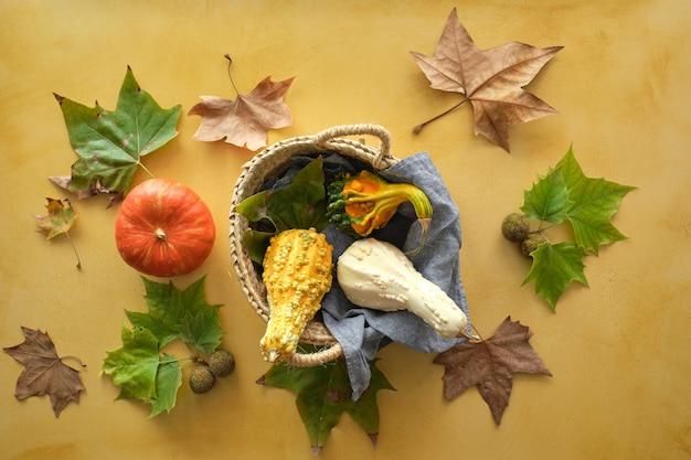 Colheita de cabaças com folhas no outono