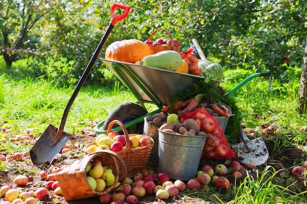 Colheita de legumes no jardim