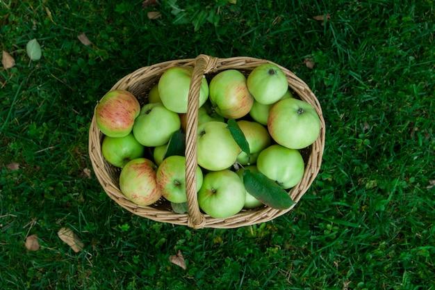 Colheita de maçãs maduras em uma cesta na vista superior da grama