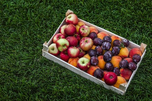 Colheita de maçãs, plumps e pêssegos agrupados em uma caixa deitada na grama verde.