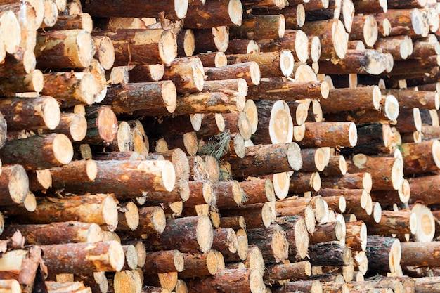Colheita de madeira na extração de madeira. troncos serrados empilhados em pilhas de perto, vista lateral na pilha de lenha