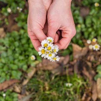 Colheita de mãos com pilha de flores