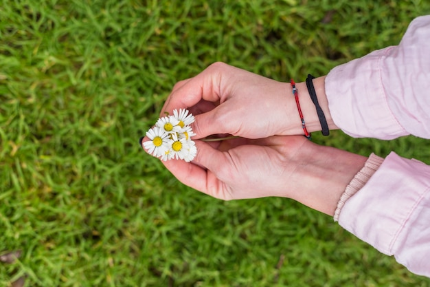 Colheita de mãos femininas com margaridas coloridas
