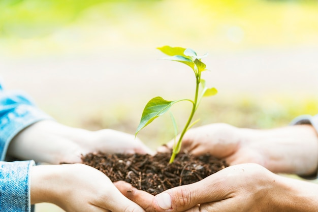 Colheita de mãos transportando solo e mudas