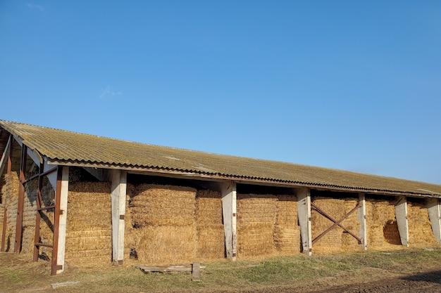 Colheita de outono, montes de feno para armazenamento de palha