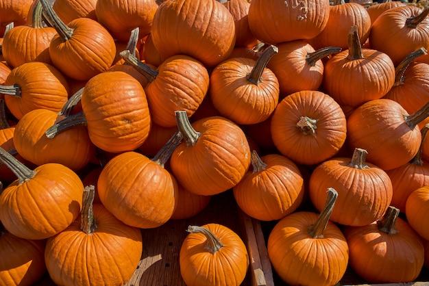 Colheita de outono, muita abóbora no balcão, o mercado.