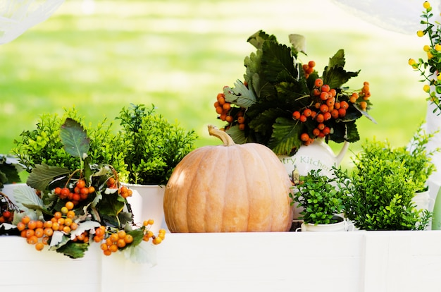 Colheita de outono para o halloween ou oktoberfest na natureza decoração