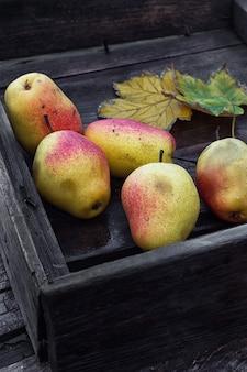 Colheita de peras