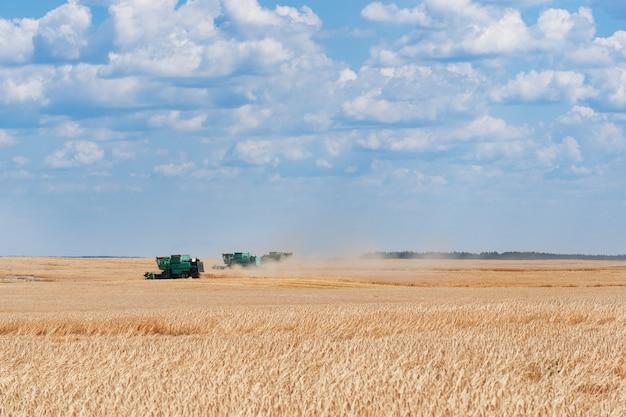 Colheita de trigo. colheitadeira remove trigo no campo