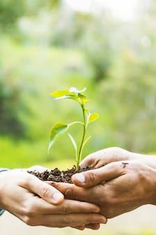Colheita, mãos, carregar planta