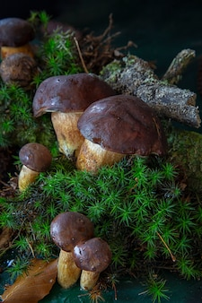 Colheita sazonal de cogumelos. preparativos para o inverno, fazendo marinadas caseiras.