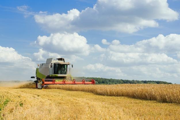 Colheitadeira colhe trigo maduro. conceito de uma colheita rica.